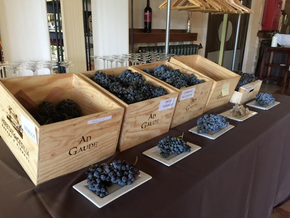 Uvas en Alicante