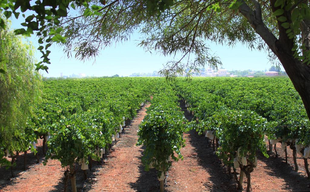 Recetas con vino Casa Cesilia